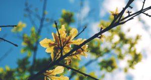 Beskärning av buskar, träd och häckar